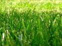 GRASS FIELD – LOOP – I – $11