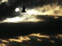 MYSTERIOUS SKY – $9