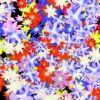 SALUTE FLOWERS – PACK 9 – $9