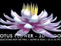 LOTUS FLOWER – LOOP – $6