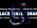 BLACK WATER SNAKE – LOOP – $10