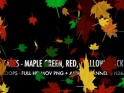 FALL LEAVES – MAPLE MIX – PACK OF 4 LOOPS – $12