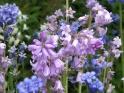 ROMANTIC FLOWERS – GARDEN BELL – $12
