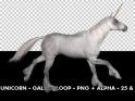 HORSE GALLOP – WHITE UNICORN – LOOP – $11