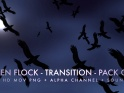 RAVEN FLOCK TRANSITION – PACK OF 6 – $12