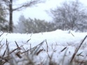SNOWING GROUND – WINTER FOREST GRASS – LOOP – $10
