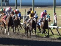 HORSE RACING TRACK – SLOW MOTION – $12