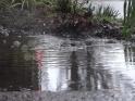 RAIN – 25 – SIDEWALK, PUDDLE, DROPS, GRASS – $25