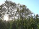 GRASS AT THE SUN – LOOP – 08 – $10