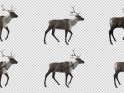 REINDEER – WALK – PACK OF 6 LOOPS – $12