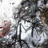 SNOW DROPS ON WINTER WINDOW – IV – LOOP – $6