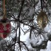 WINTER PINE WITH XMAS TOYS – $25