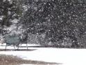 WINTER VILLAGE – 08 – PARK BENCH, PINES, SNOWFALL – $25