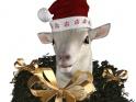 SHEEP – WINTER HOLIDAYS & CHINESE ZODIAC – LOOP – FREE