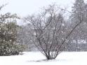 WINTER VILLAGE SNOWFALL – II – $10