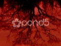 BLOODY POND & TREE REFLECTION – $25