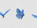 FLYING BUTTERFLY – BLUE ADONIS – LOOP – $10