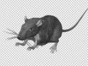 GRAY RAT – JUMP RUN LOOP – SIDE ANGLE – $10