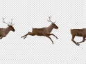 RED DEER – RUNNING OVER SCREEN – 4K – $25