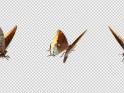 FLYING BUTTERFLY – FOXY EMPEROR – LOOP – $10