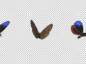 FLYING BUTTERFLY – BLUE CROW – LOOP – $10