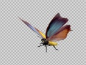 FLYING BUTTERFLY – FANTASY CHARAXES – LOOP – $10