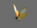 FLYING BUTTERFLY – AFRICAN DOTTED BORDER – LOOP – $10