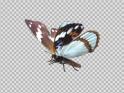 FLYING BUTTERFLY – PURPLE EMPEROR – LOOP – $10