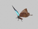 FLYING BUTTERFLY – ASIAN PEACOCK ROYAL – LOOP – $10