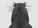GRAY RAT – JUMP RUN LOOP – BACK SIDE – 4K – $25