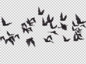 FLOCK OF BATS – ANGLE FLYING – I – LEFT TO RIGHT – $10