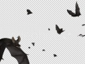 BATS – SWARM FLYING AROUND – LOOP – $10