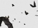 BATS – SWARM FLYING AROUND – LOOP – $10