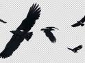 BIRDS – FLOCK FLYING AROUND – LOOP – III – $10